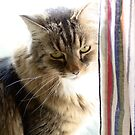 Curtain Kitty by hannahelizabeth