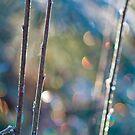 Winter Sparkle by Aimee Stewart