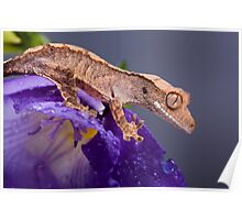 Cute crested gecko on purple Poster