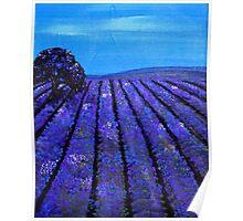 Lavender Fields Tasmania Poster