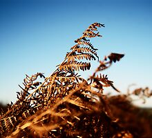 Bracken pyramid by Bob Farrell