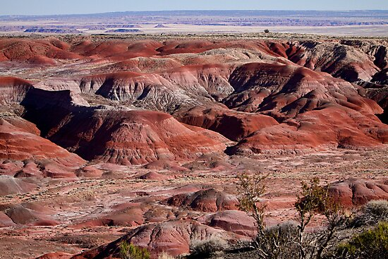 The Painted Desert  8062 by Bo Insogna