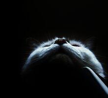 Bohemian Catsody by Ladymoose