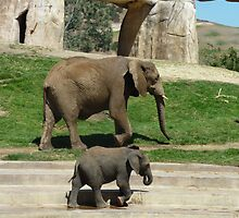 Elephants by Jennie Whiting