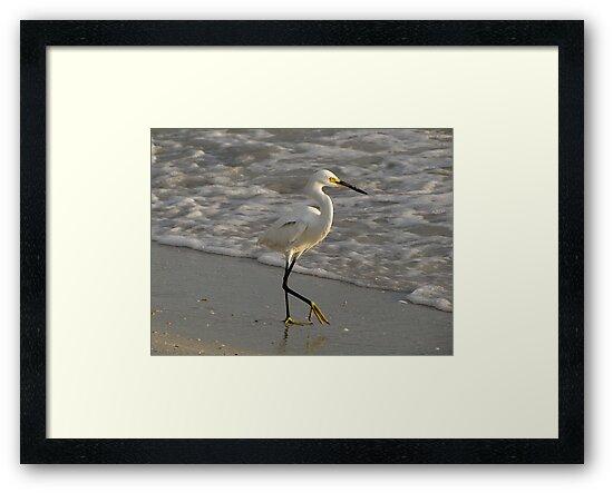 Snowy Egret by Irina777