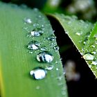 """Raining Diamonds"" by MellyClaire"