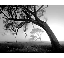 Foggy Morn Photographic Print