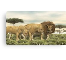 African Lions Canvas Print