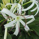 Flower Mystery by Debbie Robbins