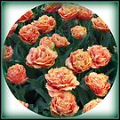 Orange Frilled Tulips Vignette by BlueMoonRose