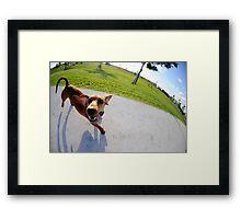 Weiner Dog In The Park Framed Print