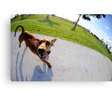 Weiner Dog In The Park Canvas Print