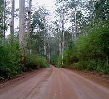 Forest road, Western Australia by DashTravels