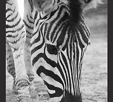 Zebra Crossing by Emma Holmes