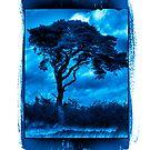 Tree at Priddy Pool by Robert Down