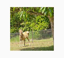 Cute miniature horse foal Unisex T-Shirt