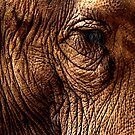 Elephant by Robyn Carter