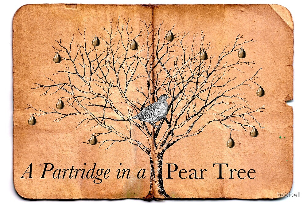 A Partridge in a Pear Tree by babibell