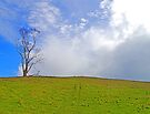 One Tree fronting the Rain Cloud by Graeme  Hyde