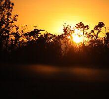 golden sunrise by myhobby