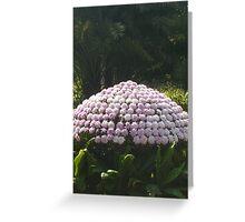 Sunlight softly caressing a  beautiful purple mushroom Greeting Card