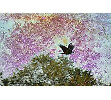 Raven Nightmare Photographic Print