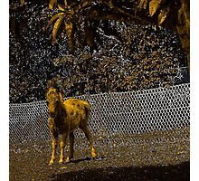 Abstract foal in gold and black Photographic Print