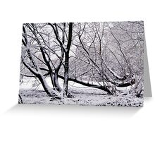 Climbing Snow Trees Greeting Card