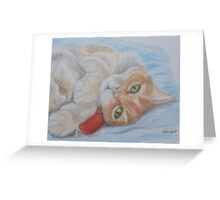 Feeling kittenish ... Greeting Card
