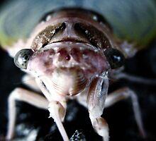 The Locust by garamer