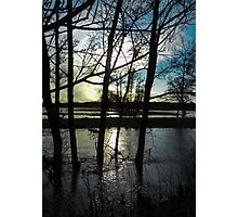Trees in the flood Photographic Print