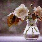 December rose by Susana Weber