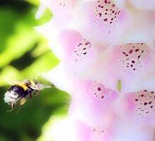 Flight of the Bumble Bee by missmoneypenny