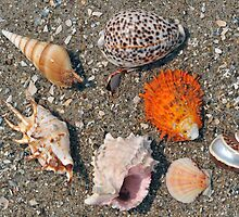 Group of seashells on the sand and ocean by Anton Oparin