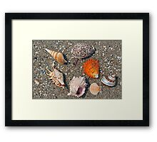 Group of seashells on the sand and ocean Framed Print