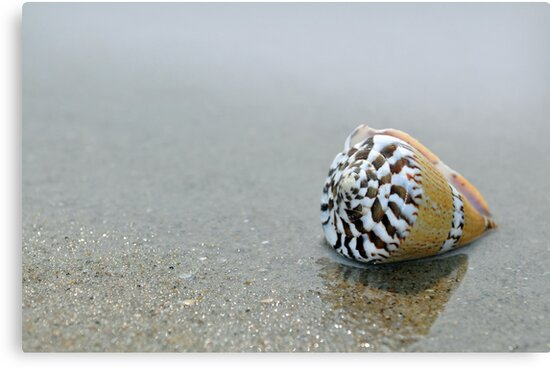 Seashell on the sand and ocean 9 by Anton Oparin