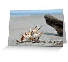 Seashell on the sand and ocean 8 Greeting Card