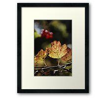 West Sweden Autumn colour Framed Print