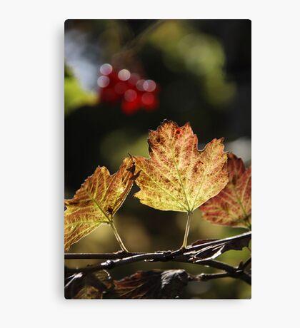 West Sweden Autumn colour Canvas Print