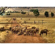 A York Farm Photographic Print