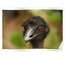Portrait of an emu in colour  Poster