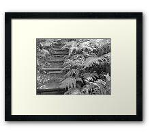 Rainforest Steps Framed Print