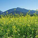 The Fields of Abraham by SAJONES