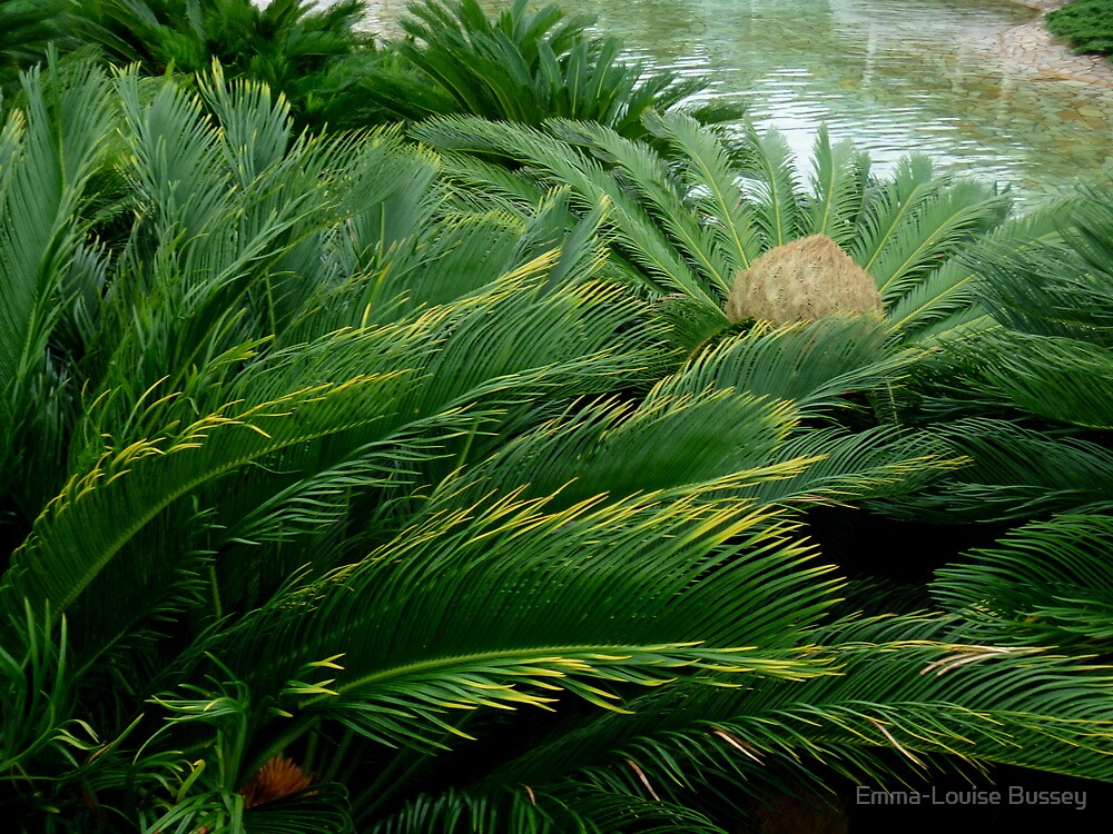 Pine River by Emma-Louise Bussey