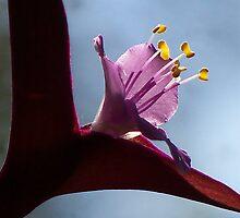 Purple Heart by saripin
