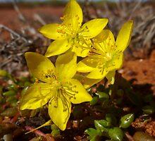 Pilbara Blooming - Western Australia by Dan & Emma Monceaux
