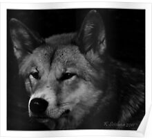 Canine portrait in b/w Poster