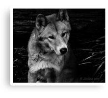 Cutey dingo in b/w Canvas Print