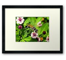 A Wasp On A Flower.... Framed Print