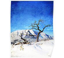 Burmis Tree Poster